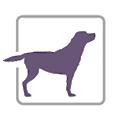 PurpleLab