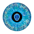 NeurOptics logo